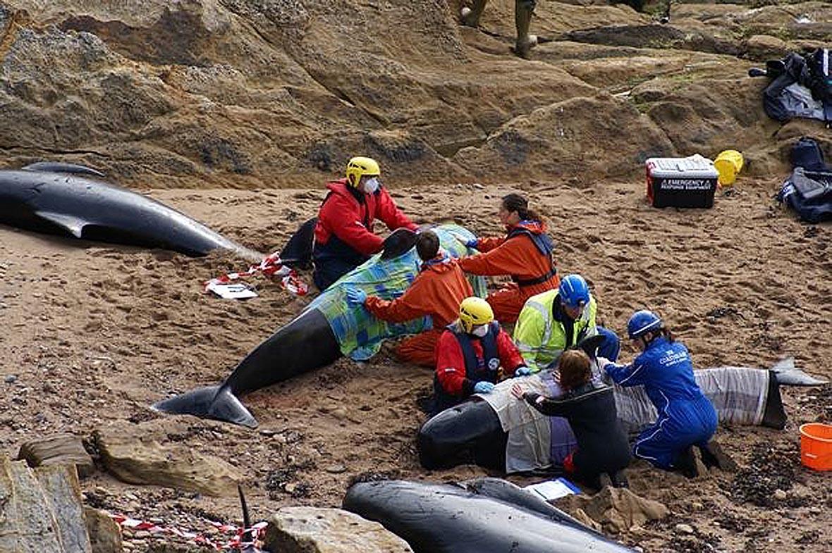 Рыбацкий посёлок. Питтенуим. 22 кита, осталось 13, 4 не выживут, 30 медиков-добр. 25 организаций. Шотландия(12)