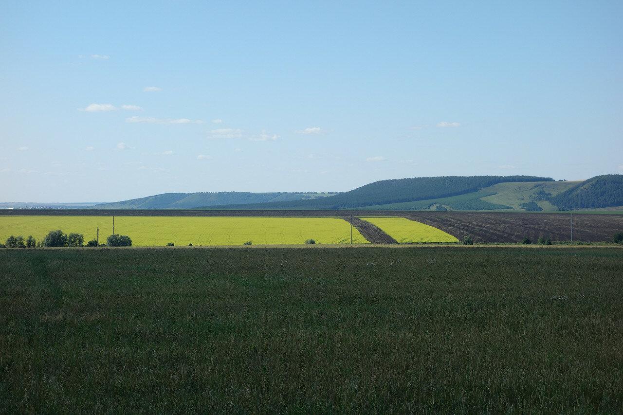 поля и луга Татарстана