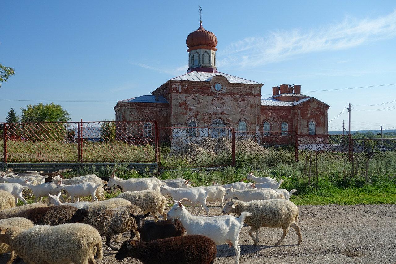 козы-овцы и храм