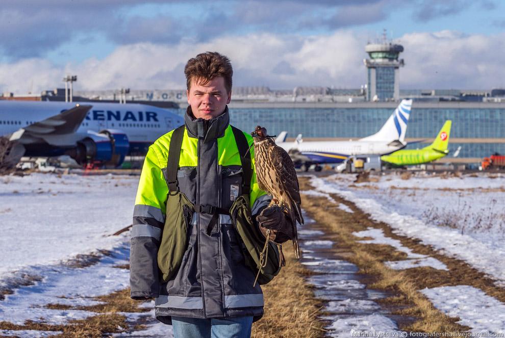 8. На сегодняшний день для обеспечения орнитологической безопасности полетов в аэропорту Домоде