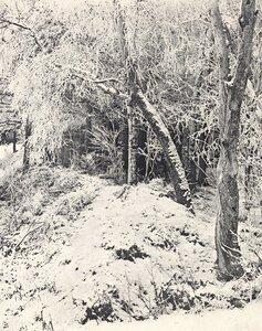 1893. Зимний лес