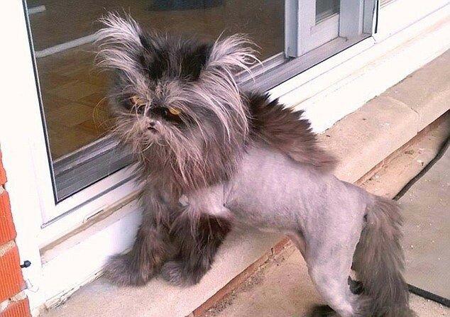 Кошка с синдромом оборотня