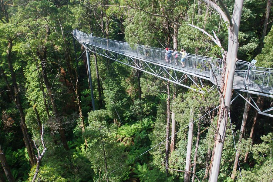 Австралия: дремучий лес