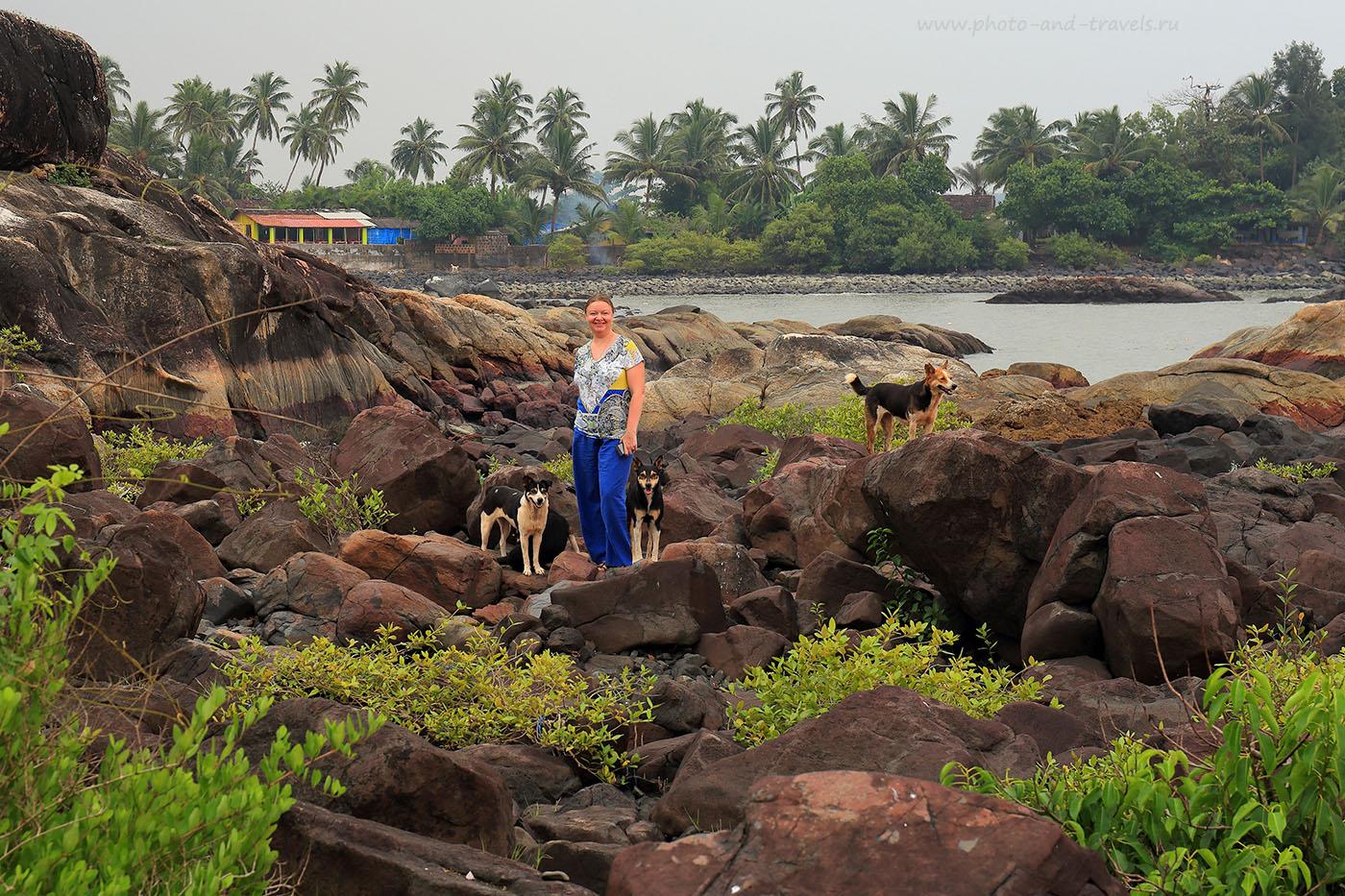 Фотография 16. Среди собак. Отзывы о самостоятельном отдыхе в Индии на Южном Гоа (24-70, 1/100, -1eV, f9, 70mm, ISO 100)