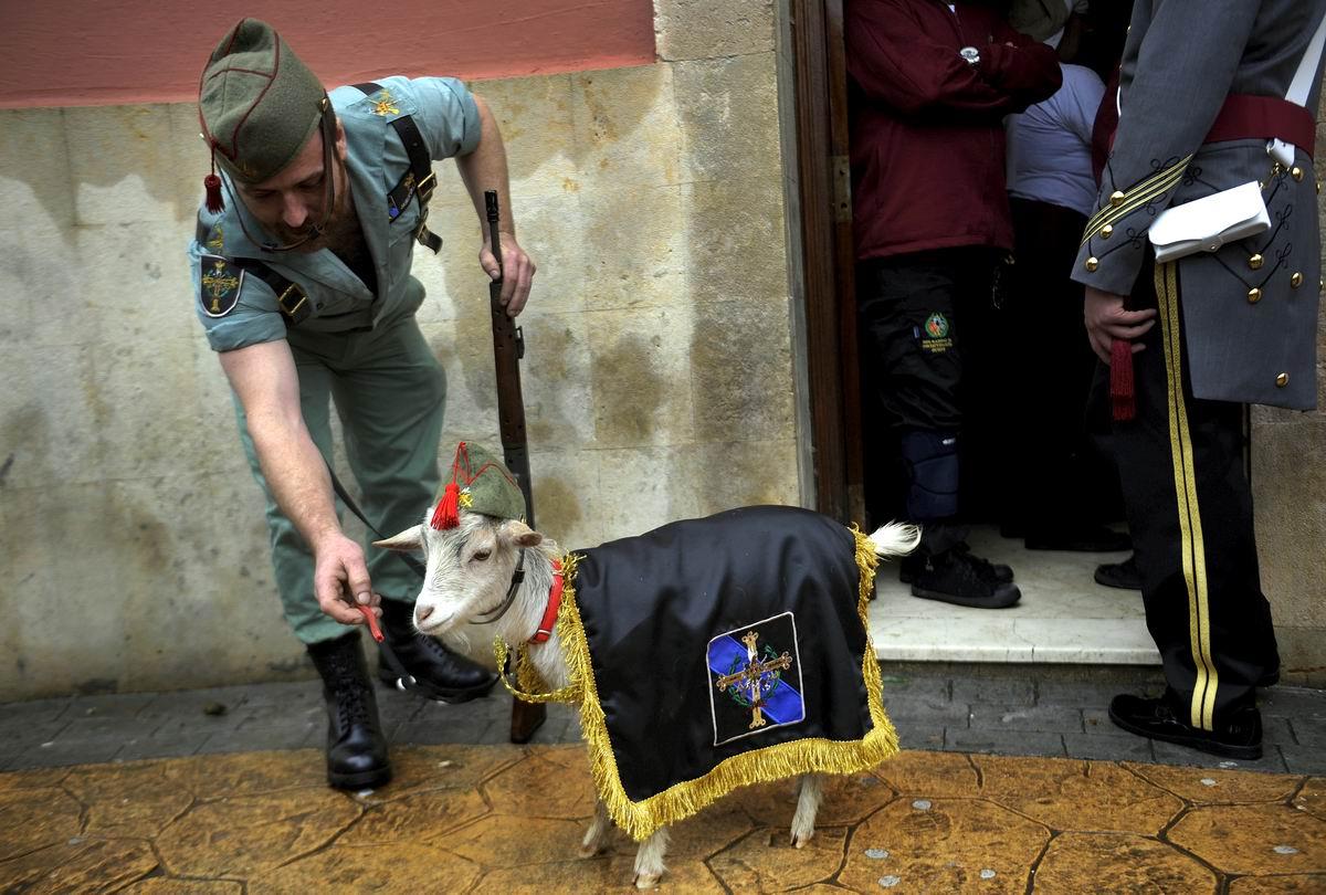 Устал. Хочу в казарму: Грустный козлик из Испанского легиона