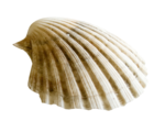 океанский бриз