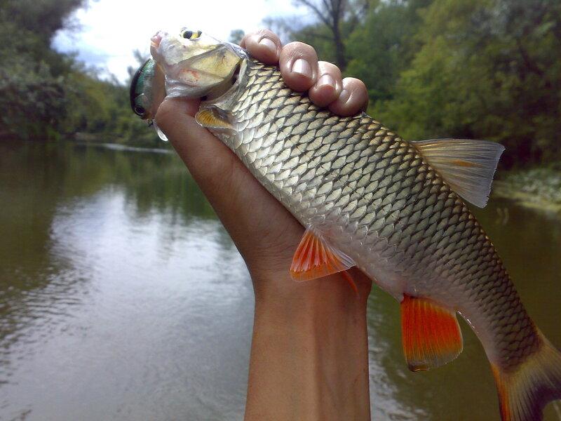 река медведица тверская область рыбалка