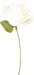 NLD Candilicious Cream Flower (2).png