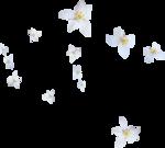 kimla_WFTS_flowers.png