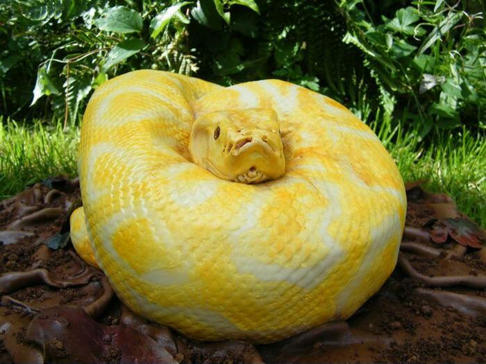 Не только на востоке умеют аппетитно готовить змей