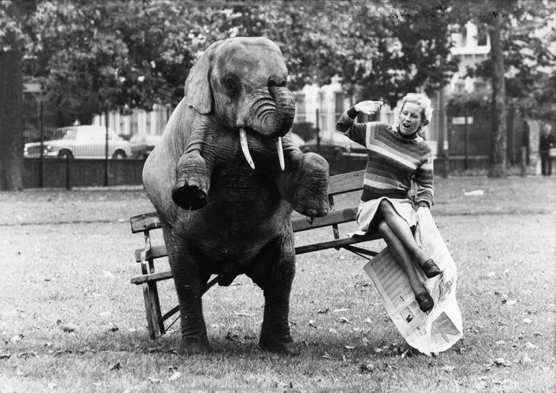 Elephant Upset