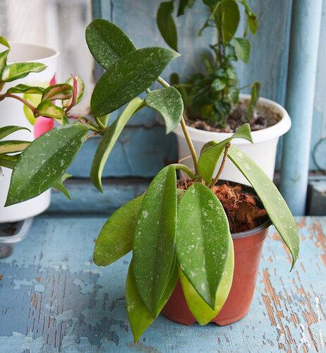 Растения полученные из Тюмени. Отзывы, хвасты!!! - Страница 2 0_64626_4f327521_L