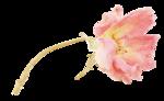 «victorian rose» 0_94a78_790a2c10_S