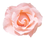 «victorian rose» 0_94a84_5e6bc3be_S
