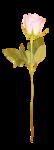 «victorian rose» 0_94a86_bfc168ff_S