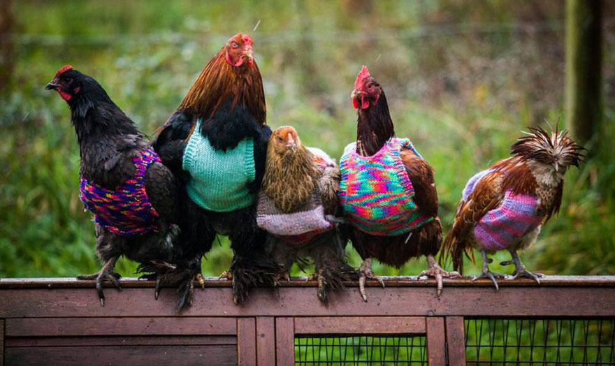 Курточки и свитера для спасенных цыпочек
