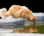 1401_-_cat_-_LB_TUBES.png