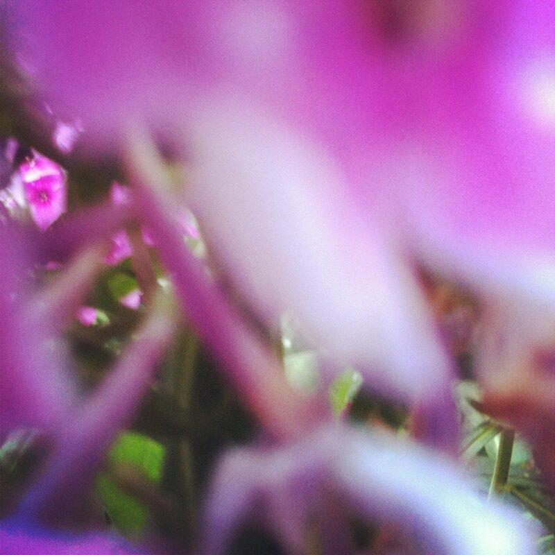 Во все розовое