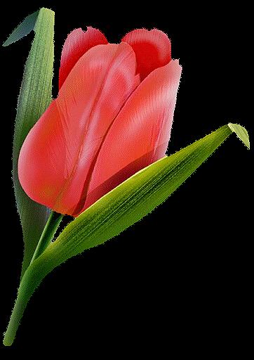 Беси, гифки тюльпаны на прозрачном фоне