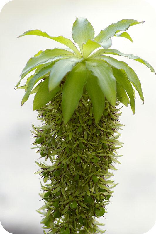 Смешное пальмообразное