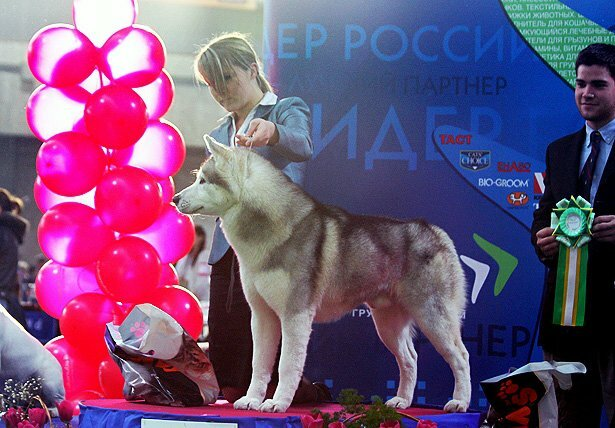 http://img-fotki.yandex.ru/get/6600/52493620.22/0_7f1f2_cb7f70e3_XL.jpg