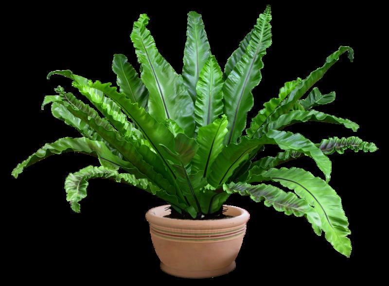 Plante interieure for Plantes d interieures