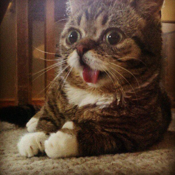 Кот с выпученными глазами прикольные фото