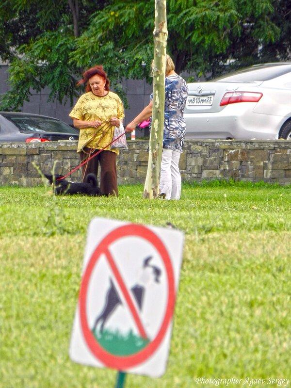 Тётки выгуливают собак на газоне где выгул запрещён.jpg