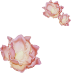 Lilas_Iced-Roses_elmt (61).png