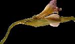 kimla_DN_flower2.png