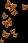 kimla_DN_butterflies.png