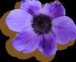 kimla_WFTS_flower4_sh.png