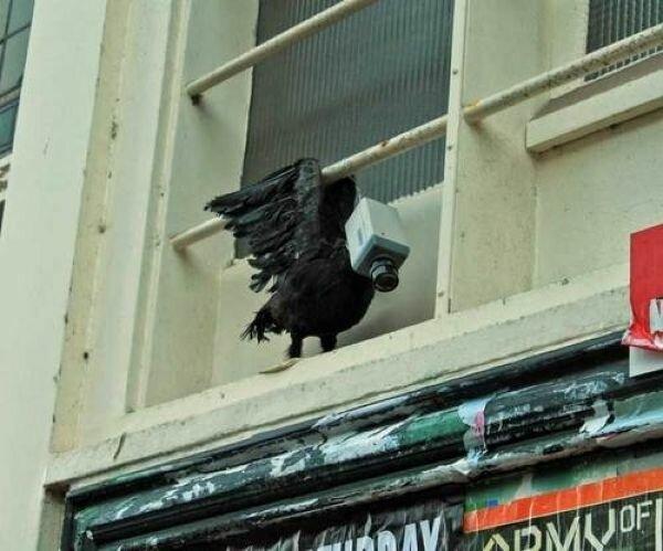 Таксидермисты очень любят издеваться над птичками