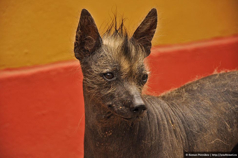 0 196e4d 733f3352 orig День 296 298. Тропа Клары в Трухильо. А также День Независимости Перу, культура Моче, саманный город Чан Чан, лысые собаки и отменная перуанская ягнятина