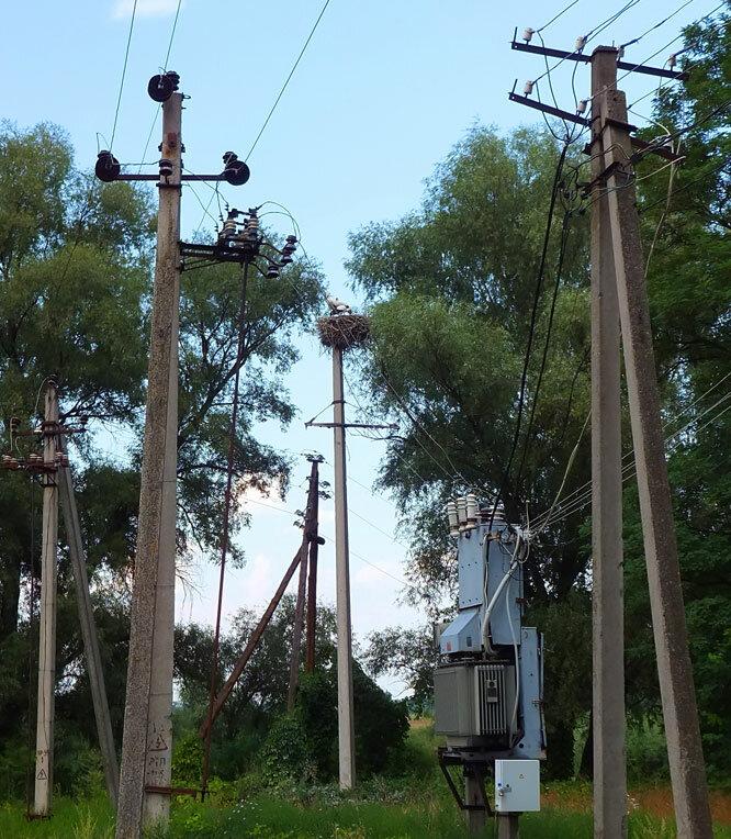 электричество и аисты