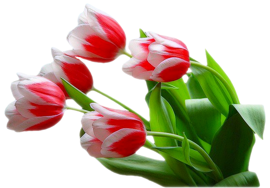 Букет цветов на прозрачном фоне