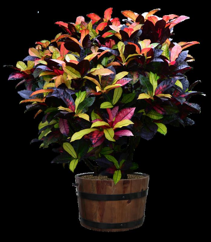 Tb plante d 39 interieure for Plantes d interieures