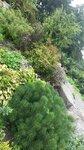 Ботанический сад г.Владивосток