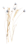 LottaDesigns_OldWorld_dried_flowers.png