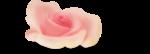 NLD Candilicious Sugar Rose sh.png