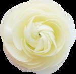 kimla_WFTS_flower1.png