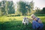 Две козы.jpg