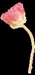 «victorian rose» 0_94a7d_e3c3ade7_S