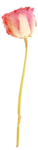 «victorian rose» 0_94a7e_8f59a754_S