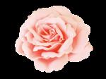 «victorian rose» 0_94a81_37c68eb5_S