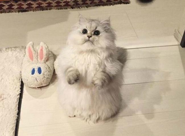 © funnycatpix.com  Моя кошка увидела, как дети играют наэтой штуке, итеперь отказывается спу