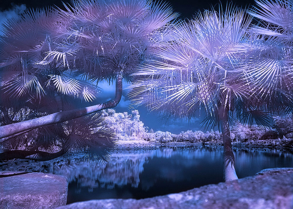Парк Томока, Флорида: