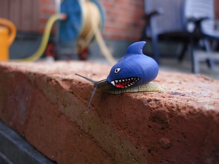 Улитка «Акула»