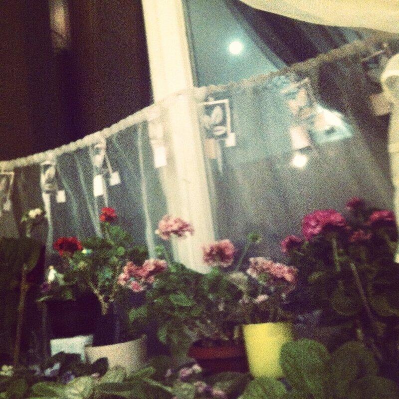 Луна-луна, цветы-цветы