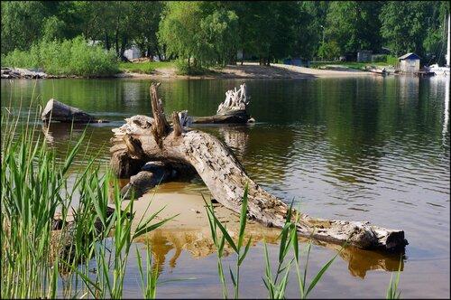 Деревцо возле пляжа Коса